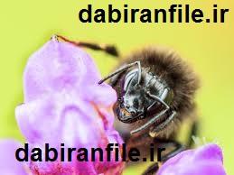 دانلود نمونه طرح جابر زنبور